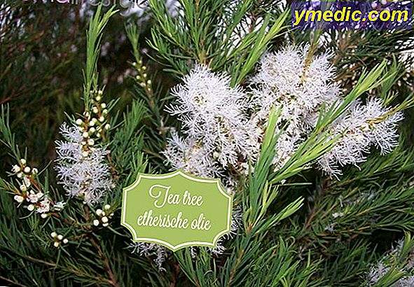 Etherische tea tree olie (Melaleuca alternifolia)