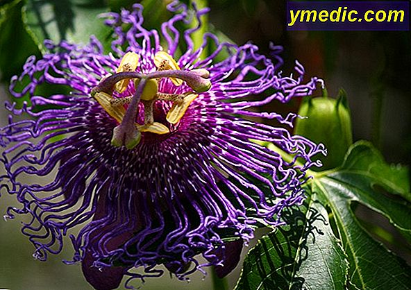 Sleep with the passionflower