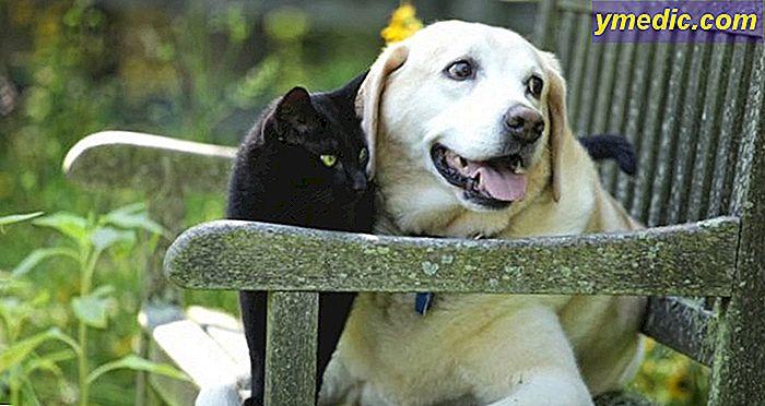 a13b2389028c Αντιμετωπίστε την εποχική αλλεργία του σκύλου ή της γάτας σας