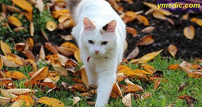 28c0c218f54a Τα φυτά είναι επικίνδυνα για τη γάτα σας στον κήπο ή στην ύπαιθρο